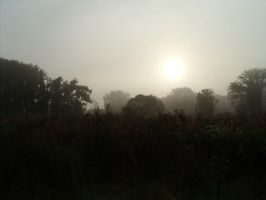 Misty morning 2 by BMFMhero1991