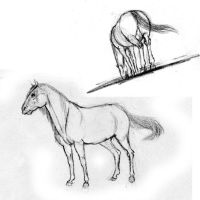 horses by BlackBy