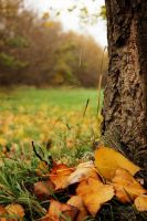 Autumn color by sstando