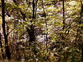 Autumn in the woods 4 by graffer66