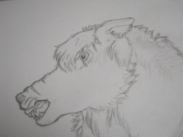 wolf Wip 2 by ponygirl74