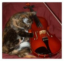 The Cat and the Fiddle by Captain-Planet