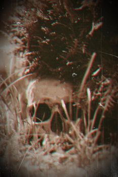 Skull 1 by nezumi-photography