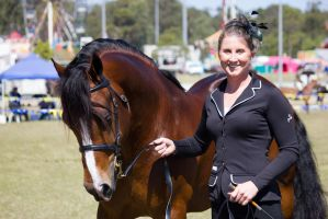 STOCK - Gold Coast show 259 by fillyrox