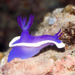 Nudibranch underwater III by MotHaiBaPhoto