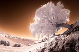 infrared tree by jeje62