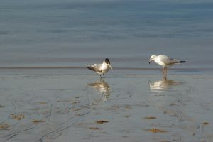 Gull and Tern 2 by FallowpenStock