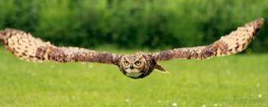 Flying low by FreyaPhotos