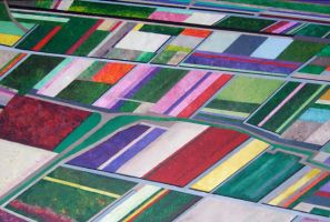 Tulip Fields by jfkpaint