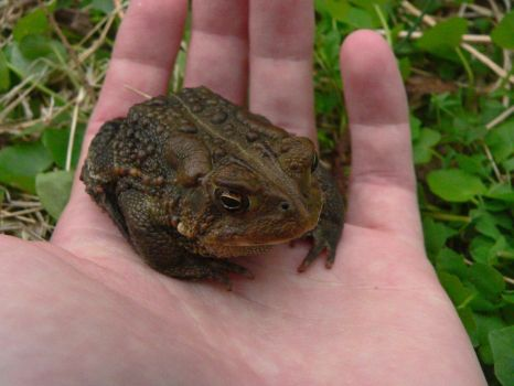Toad in Hand by zerontology