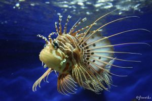 Lovely but deadly Lionfish 2 by freeorka