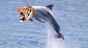 Tiger Dolphin by howtobeast101