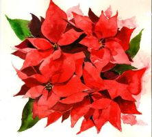 Poinsettia by balltang