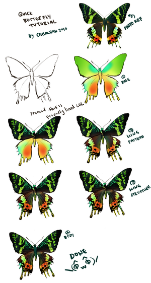 Butterfly Tutorial by chisachan2010