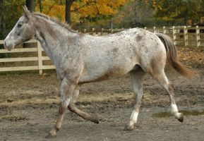 Dunner 1 by stockhorse