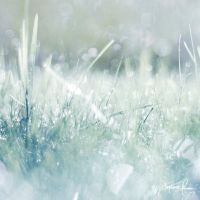 Crystallized Bokeh by Korpinkynsi