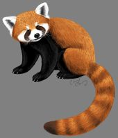 Red Panda by silvercrossfox