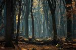 Timeless by Oer-Wout