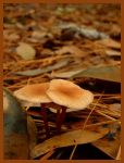 Fall Leaves and Mushrooms by effaced