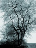 Winer tree by p2072