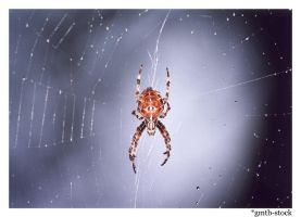 Spider by gmtb-stock