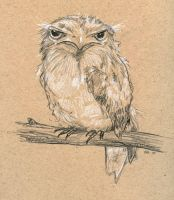 Frogmouth by ursulav