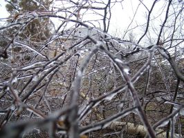 Icy branches by ZombieLothar