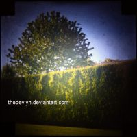 TTV - Yard by TheDevlyn