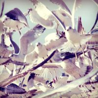 Swarm. by Littography