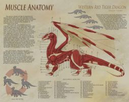 Dragon Anatomy - Muscle by UberKudzu