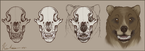 Bear Head Study by Klumpeh