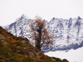 Lonely tree by bellaricca