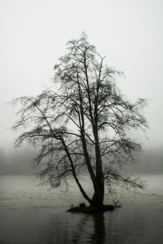 Lonetree2 by SYSPLUCK