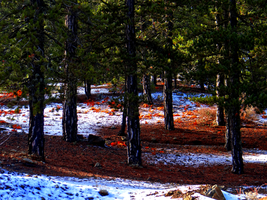 Troodos Day Trip -3- by IoannisCleary