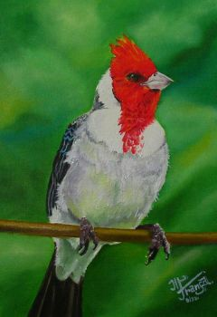 Red-cowled Cardinal by kaltblut