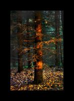 old golden picea by art-o