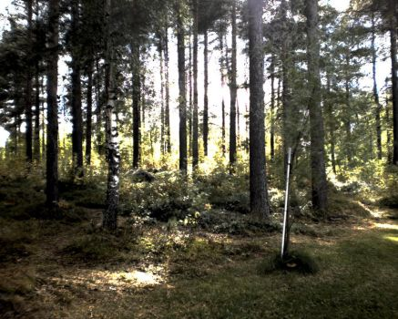 Some trees or something. In HDR. by wwwwolf