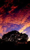 Fire in the Sky by TchaikovskyCF