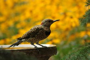 Flicker Friend by ringette-and-riding