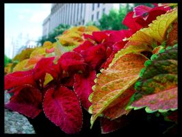 Coloured Leaves by deadward1555