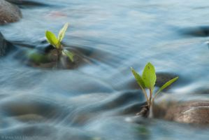 Growing upstream by isotophoto