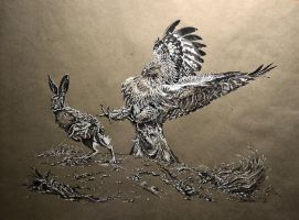 Hunting immature red hawk on rabbit by Animal75Artist