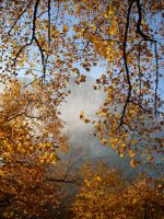 A little cloud in the forest of Autumn by TinyWild