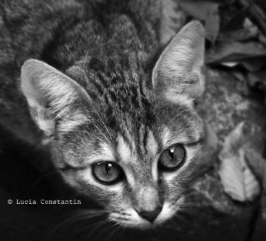 Dedicated to Paw by LuciaConstantin