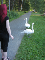 Sini and the Swans by melitooh