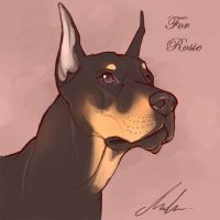 Rosie's Doberman by malta
