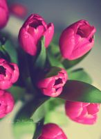 almost Mothers day by Silvia-D
