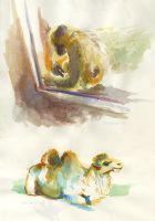 Gibbon + Camel by OrcaOwl