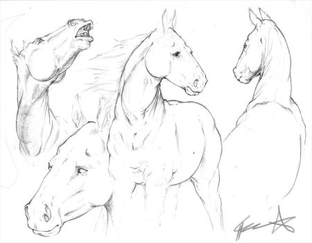 Horse sketches by ChuuStar