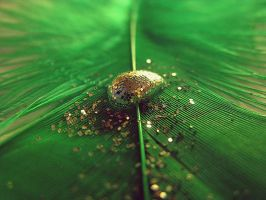 green drop. by wonderphoto